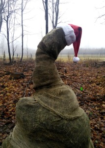 Santa hats adorn several of the burlap-wrapped evergreens that were planted earlier this year in Hampton Park.