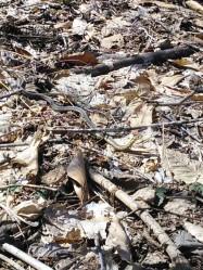 Spot the garter snake!